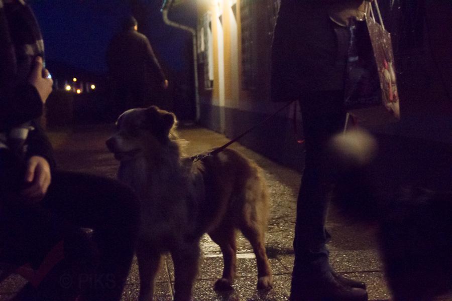 Doghof Punsch 24
