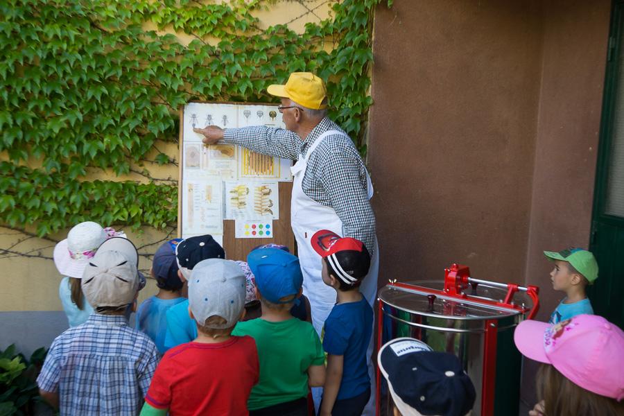 Bienen Kindergarten 10