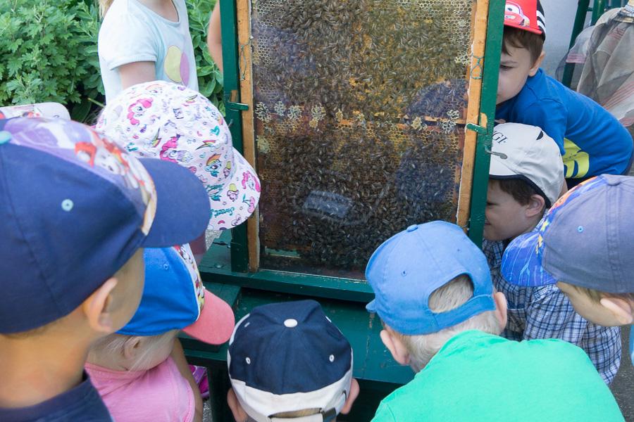 Bienen Kindergarten 13