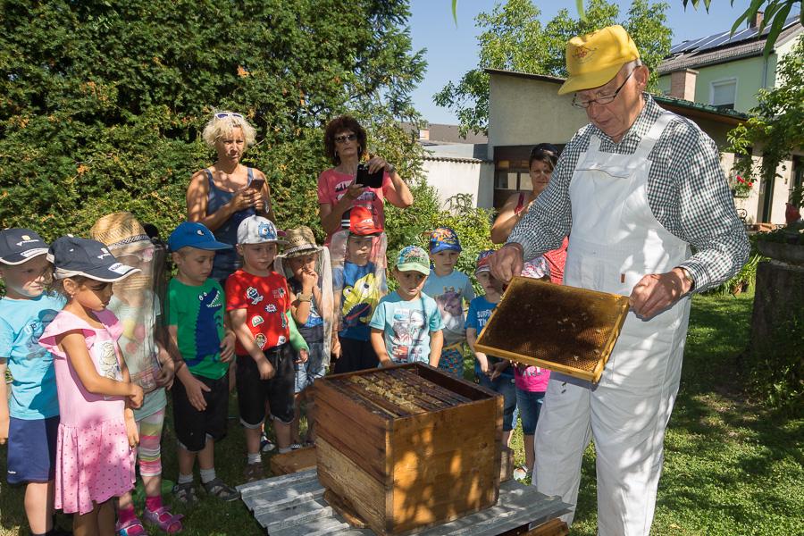 Bienen Kindergarten 33