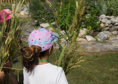 Getreideernte im Gemeinschaftsgarten