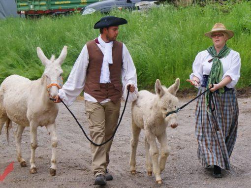 Tierumzug in Schlosshof 2011